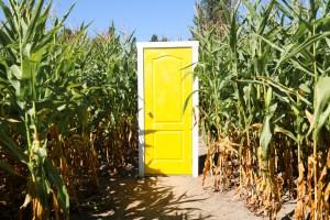 Maan Farms - Sunflower Festival