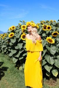 Fall travel - sunflower fields in British Columbia - Chilliwack Sunflower Festival