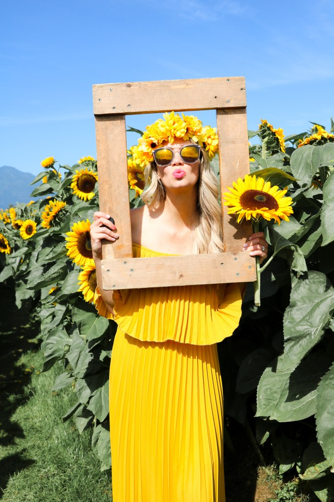 Fall travel - sunflower fields in British Columbia - Chilliwack Sunflower Festival