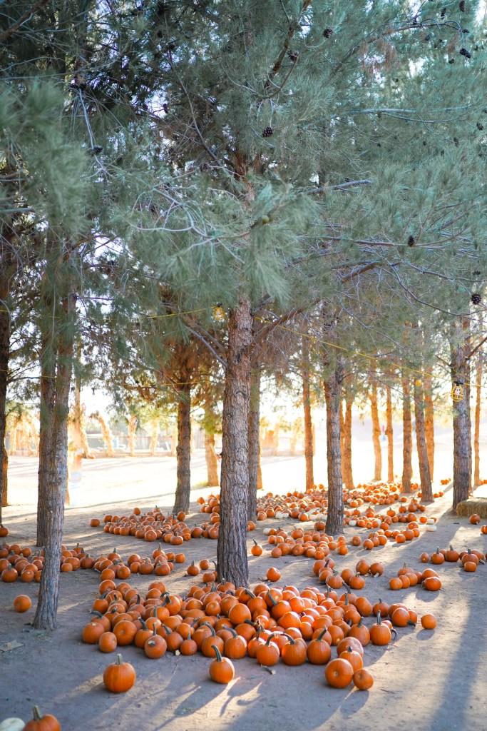Spooky Pumpkin patch in Arizona