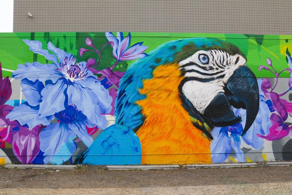 Parrot wall in Calgary, Alberta