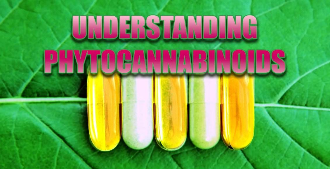 phytocannabinoids el paso tx.