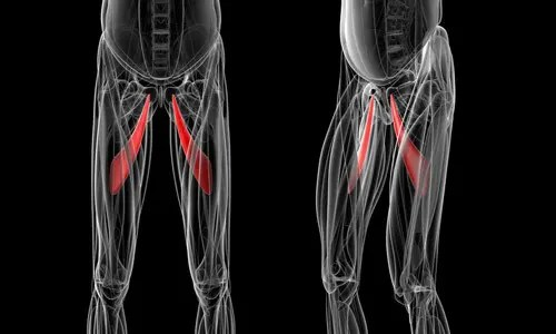 Athletic Pubalgia Mechanism of Injury   El Paso, TX Chiropractor