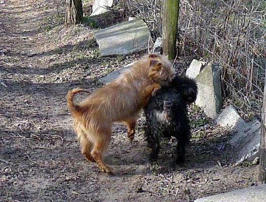 Buddy und Zsizsi (5)