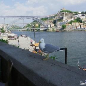 Dom Luís Bridge (Ponte de Don Luis)