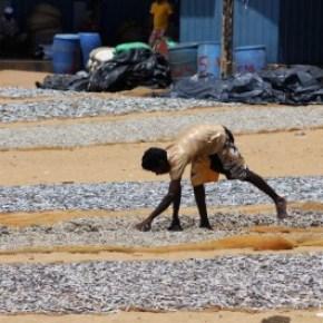 Fish market Negombo