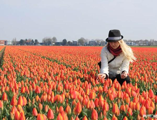 Keukenhof – vrtovi cvijeća (Nizozemska)