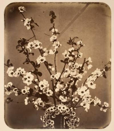 Floral Still Life (ca. 1857) Adolphe Braun