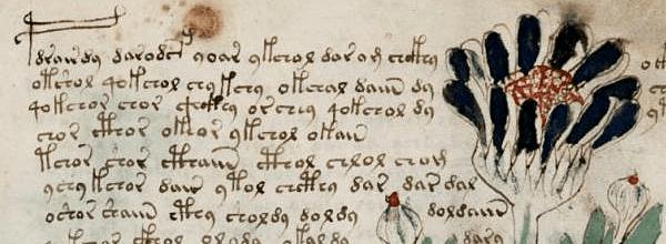 Glifos do Voynich