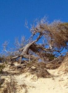 Foto verweerde boom