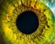 Oog-iris-groen
