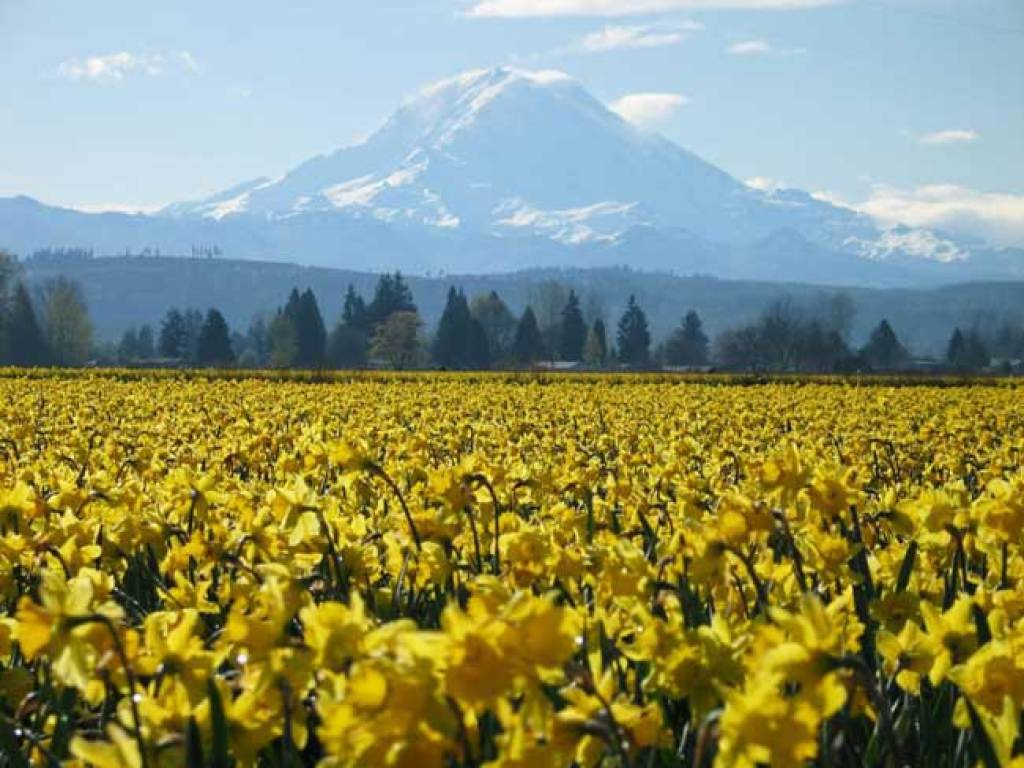 Puyallup Valley Living
