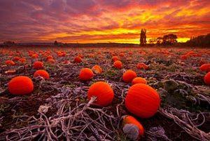 pumpkin-sunset