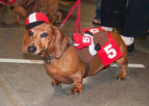 weinerdog-dogcostume2