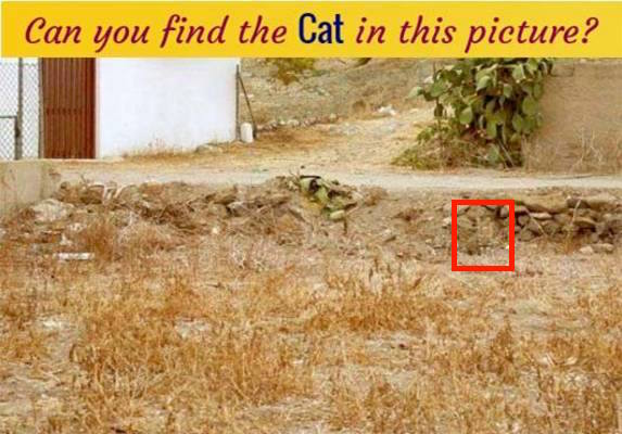 find-cat-in-this-picture-answer