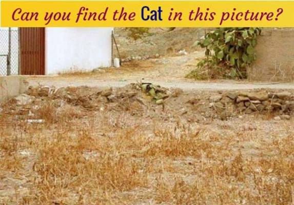 find-cat-in-this-picture