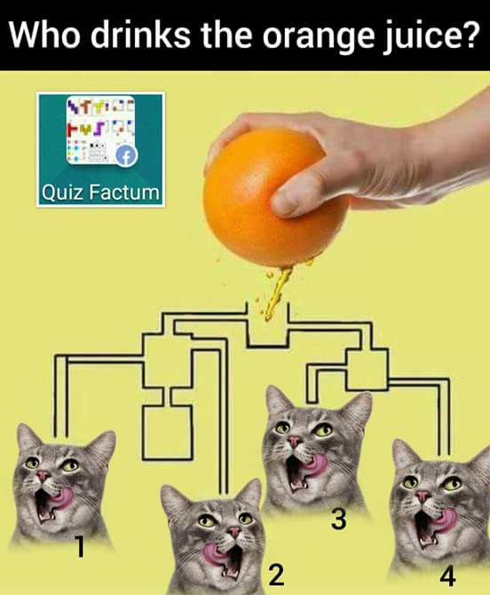 which-cat-drinks-juice-first-puzzle