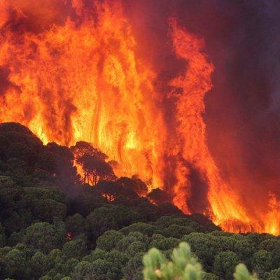 Šta bi se desilo sa svijetom kada bi Amazonija nestala?