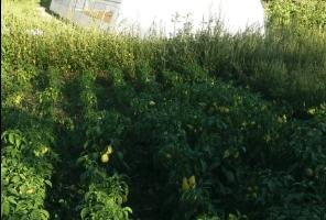 """Zahvaljujući projektu Turske Agencije """"TIKA"""" u Boščinovićima kod Pljevalja realizovan projekat besplatne dodjele plastenika nezaposlenim licima"""