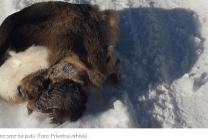 Krivolov u Bijelom Polju – Ubili srnu, kožu bacili nasred puta