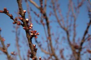 Od četvrtka proljećne temperature