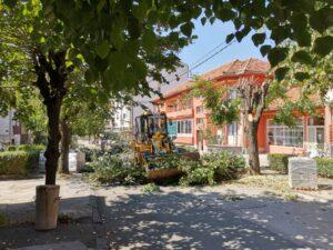 Ekoincident: Sječa lipa u Omladinskoj