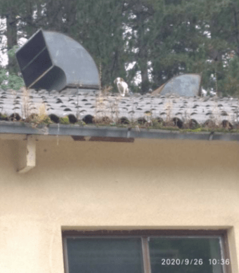 Pas bačen na krov objekta bivše Vojne fabrike – Intervenisali vatrogasci