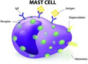 mast cell in mpn