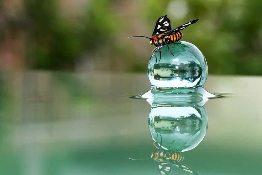 Butterflection