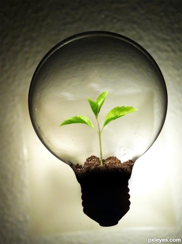 D Light Bulb