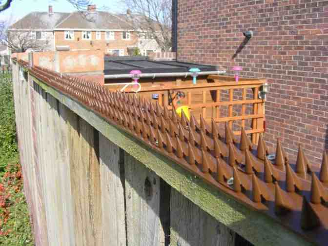 wall fence spikes to prevent cats walking on fence