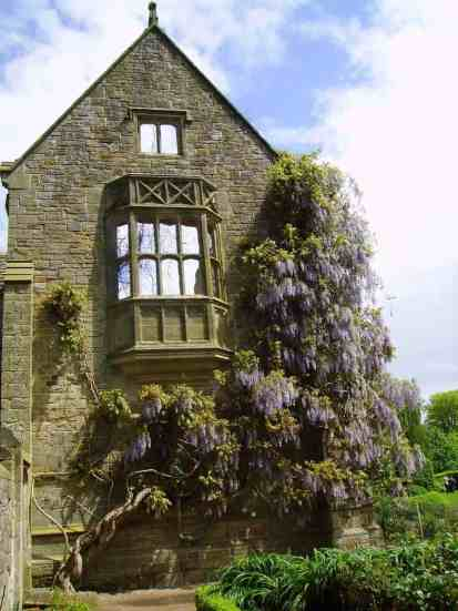 Wisteria at Nymans Gardens and