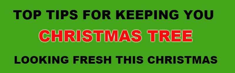 How long do real christmas trees last – pyracantha.co.uk