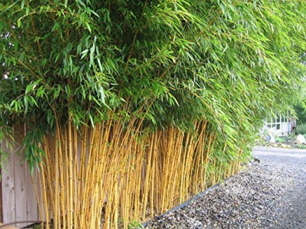 Iinstant bamboo screening - Outdoor privacy screen using bamboo which is commonly used to form screening.