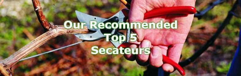 Top 8 Best Secateurs – Tried & Tested with Reviews