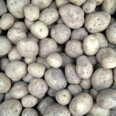 how long to grow potatoes