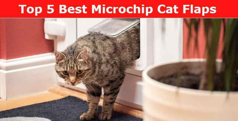 Microchip Cat Flap Reviews For 2017- We compare 6 of the best microchip cat flaps