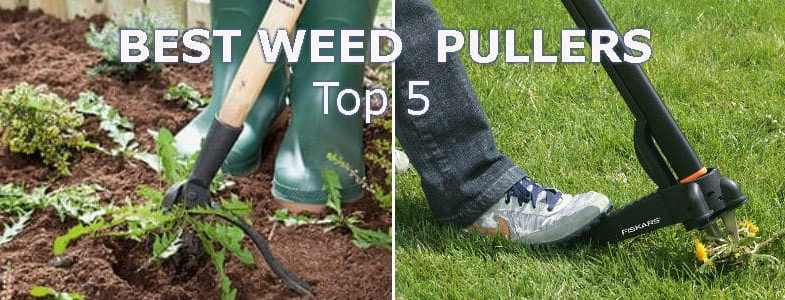 Weed puller reviews – Top 7 models for removing weeds fast