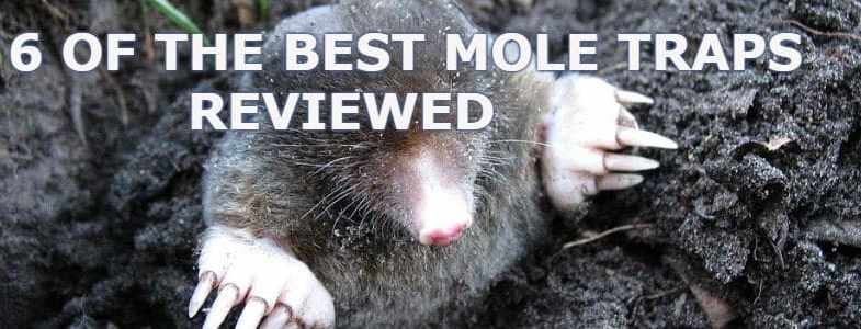 Top 6 best mole traps for catching and removing moles