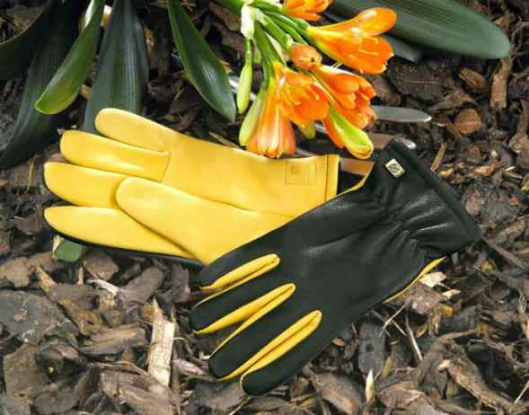 Gold Leaf Dry Touch Gloves Review