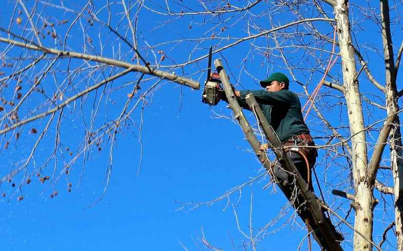 Tree Surgeon Cost for Felling Trees – Price Guide and What To Expect