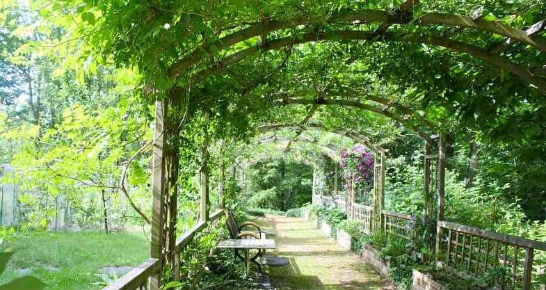 10 Best Plants for a Pergola and Garden Trellis