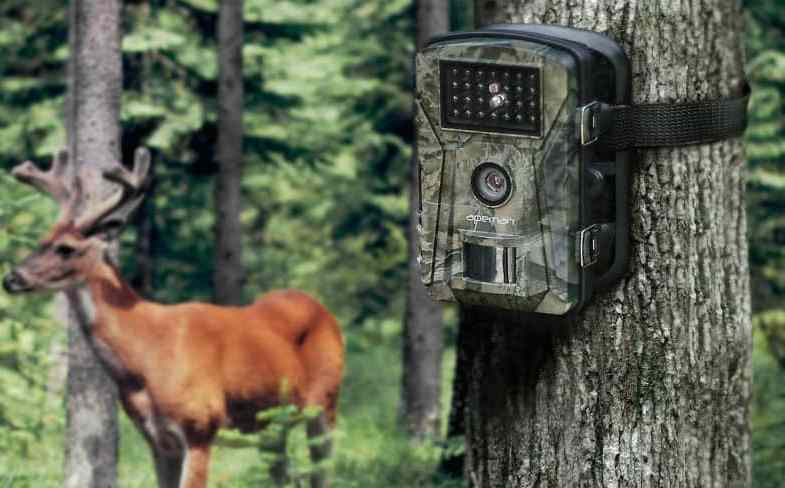 Top 5 Best Garden Wildlife Trail Cameras – Detailed reviews