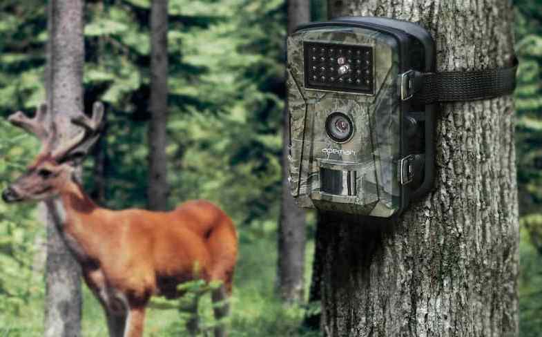 Top 5 Best Garden Wildlife Trail Cameras & Detailed reviews