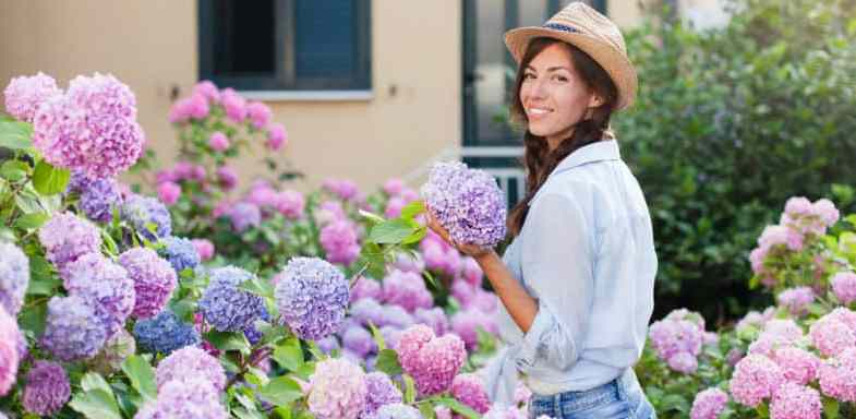 Growing hydrangeas – the beginner's guide