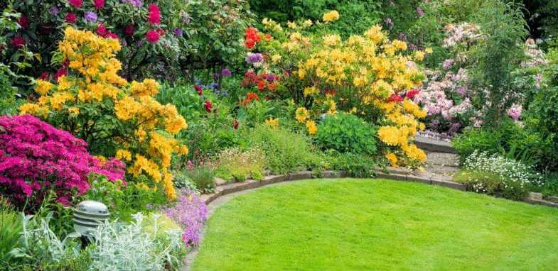 Top 10 beautiful yellow flowering shrubs
