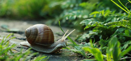 Snails and slugs will eat young plants