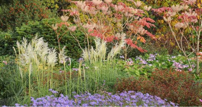 Growing pampas grass – the beginner's guide