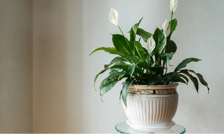 8 Best House Plants For Shade And Low Light