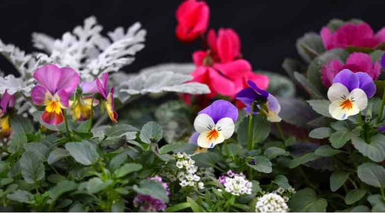 Top 10 Best plants for winter pots
